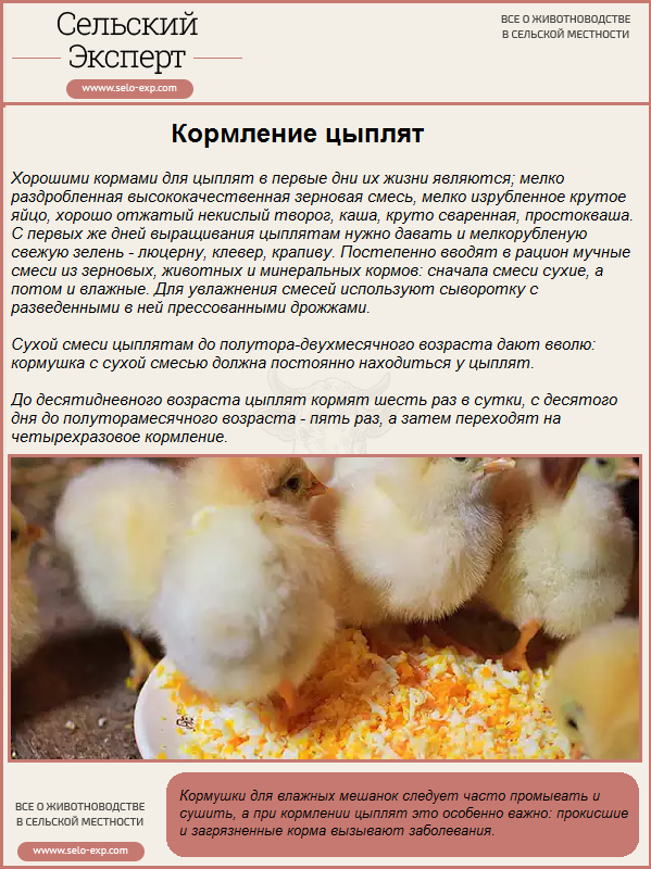 Чем кормить цыплят в первые дни жизни в домашних условиях
