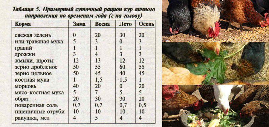 Содержание кормление цыплят бройлеров в домашних условиях