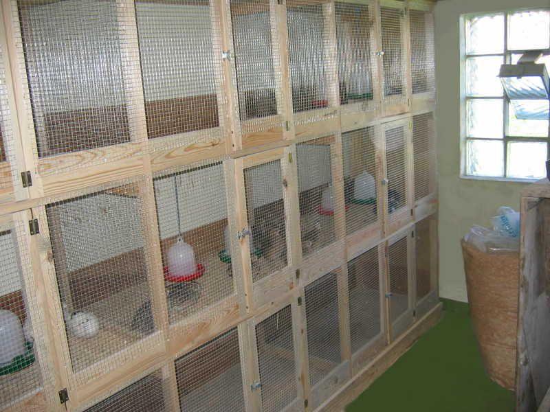 Клетки для перепелов в домашних условиях сделай сам 424