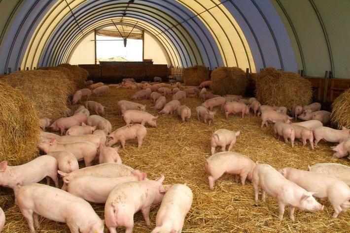 Разведение животноводства в домашних условиях