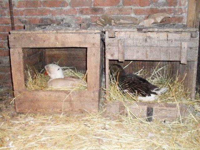 Как сделать гнездо индоуткам