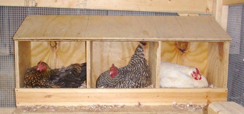 Сделать своими руками гнездо для кур несушек