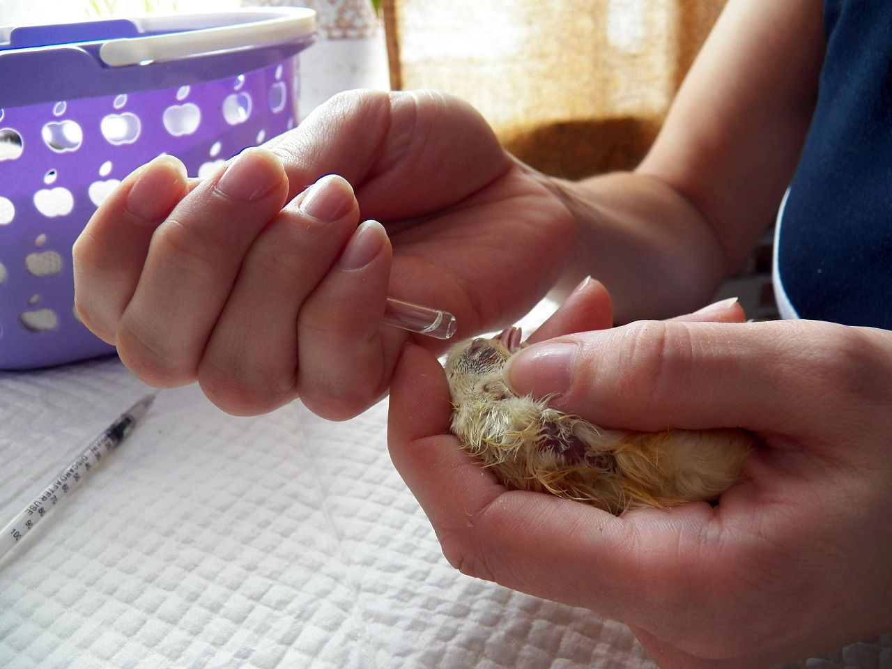 Фото как делать укол курам