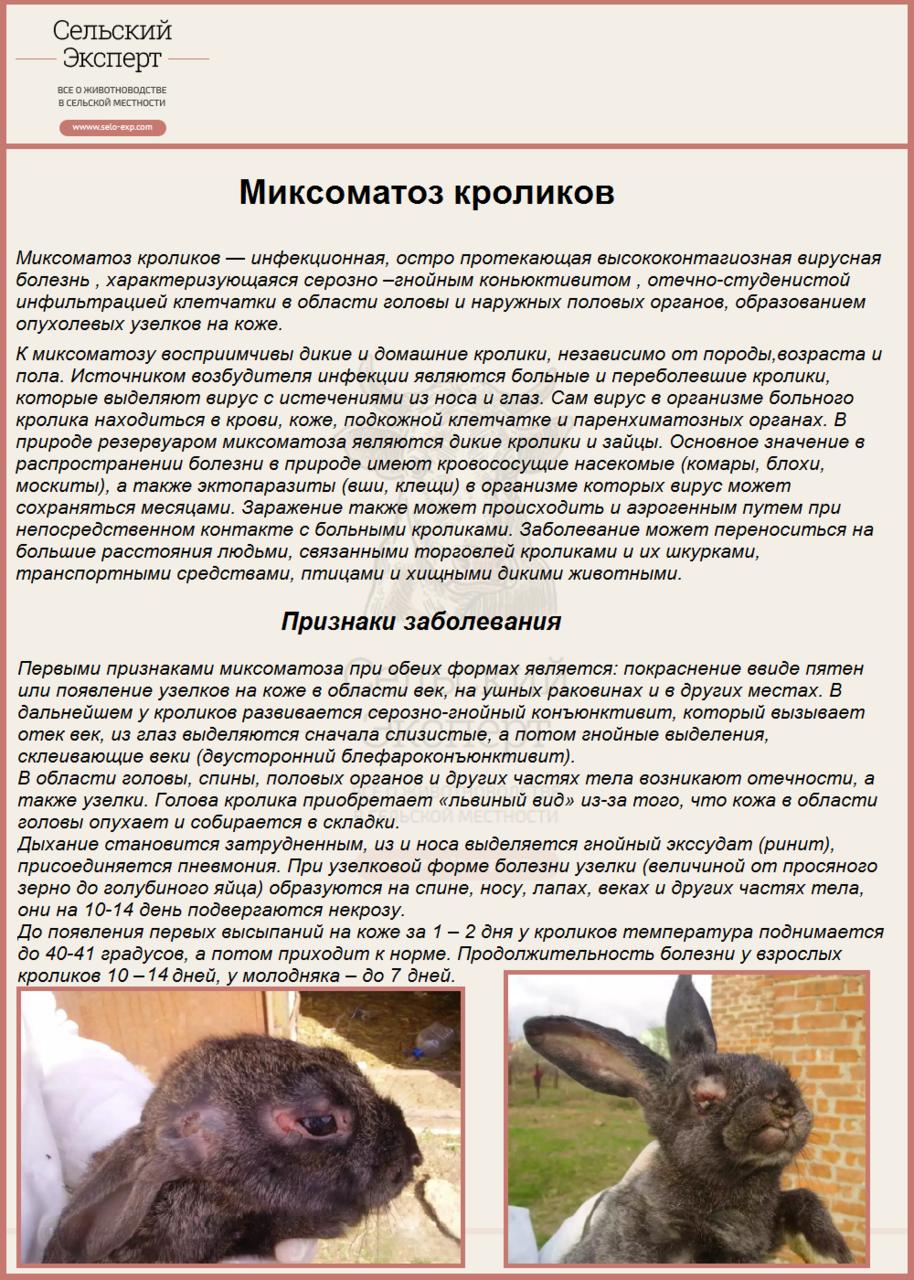 Лечение миксоматоза у кроликов в домашних условиях 874