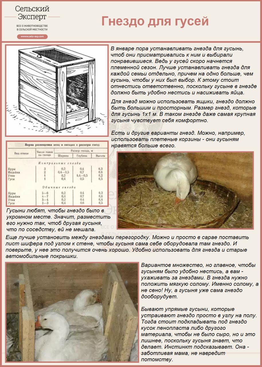 Как сделать гнезда для гусей