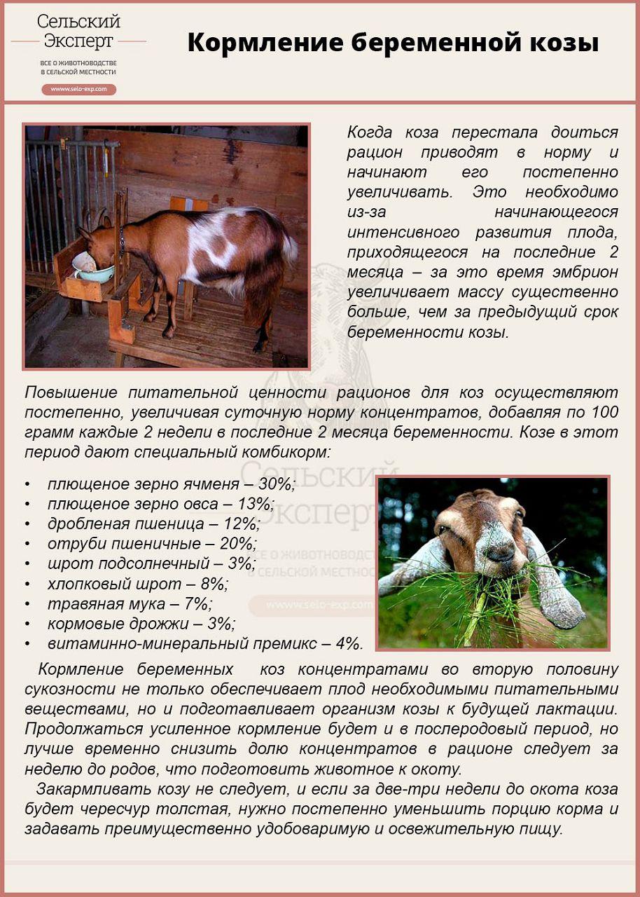 Кормление уход и содержание беременных животных