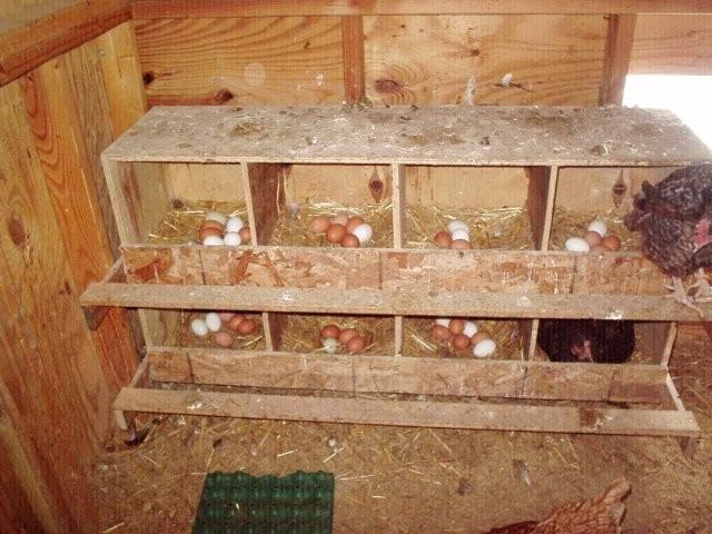 Как сделать гнезда для куриц своими руками
