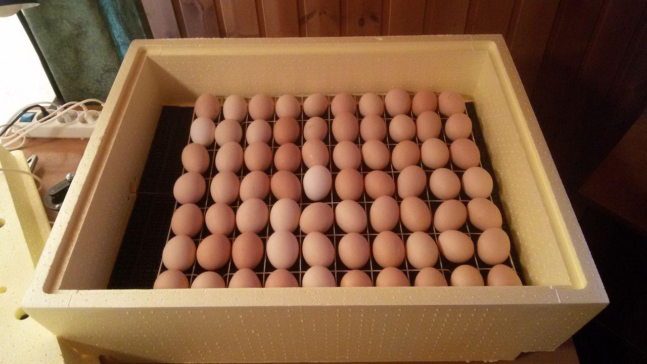 Инкубаторы для куриных яиц своими руками 48