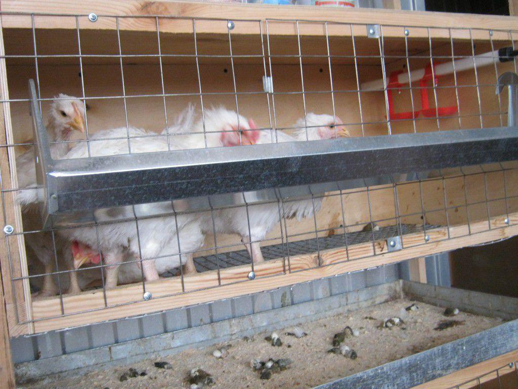 Клетки для кур в домашних условиях 5