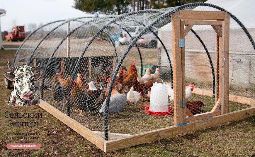 Выгул для цыплят своими руками фото 93