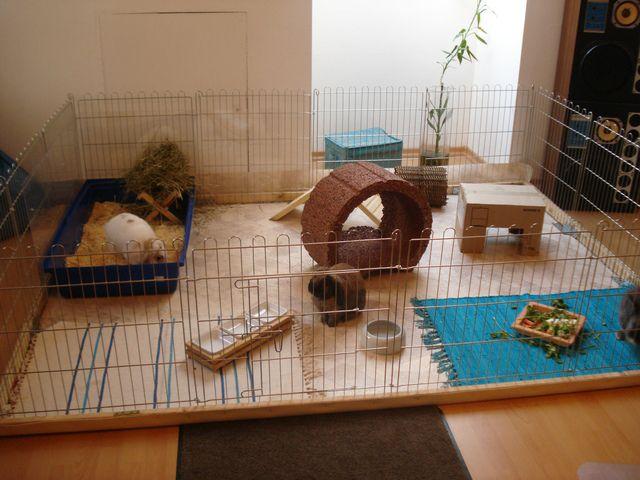 Домик декоративного кролика своими руками
