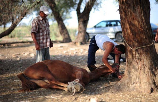 Профессия которая связана с лошадьми
