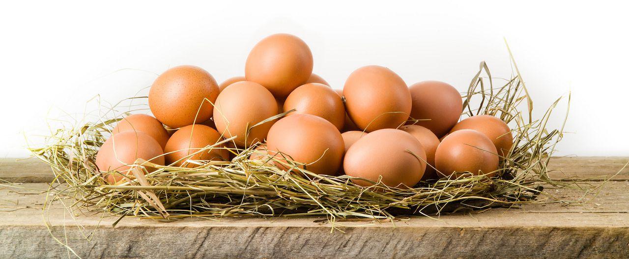 Куриные яйца в гнезде из травы
