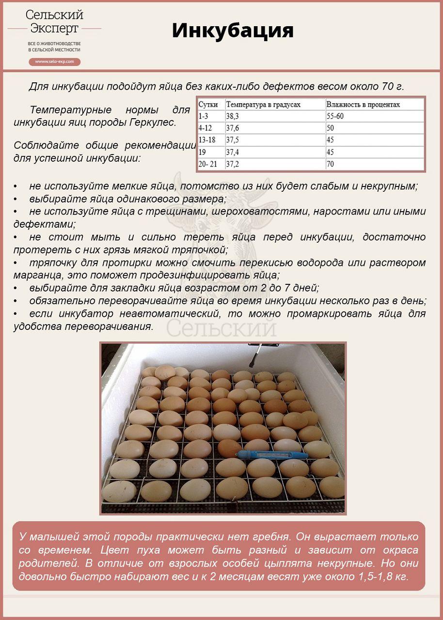 Как вывести цыплят в инкубаторе в домашних условиях 39