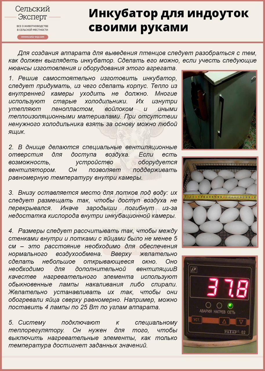 Инкубатор температура в инкубаторе