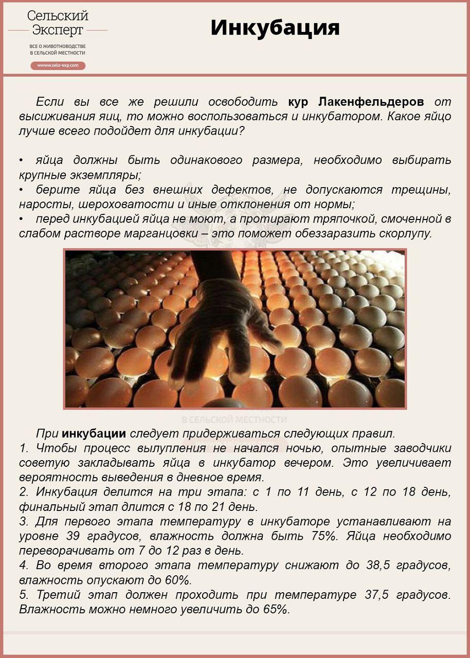 Инкубация перепелиных яиц: режим инкубации. - Инкубаторы 64