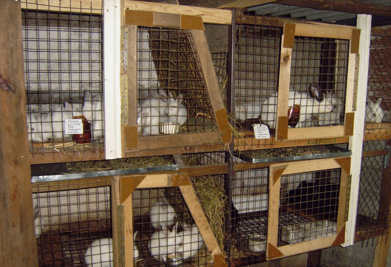Как сделать клетку кролика