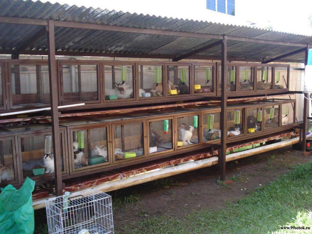 Клетки для разведение кроликов своими руками 676
