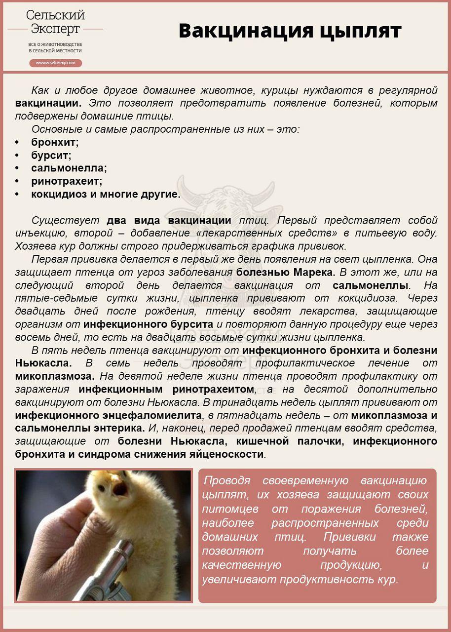 Вывод цыплят в инкубаторе в домашних условиях - таблица инкубации 71