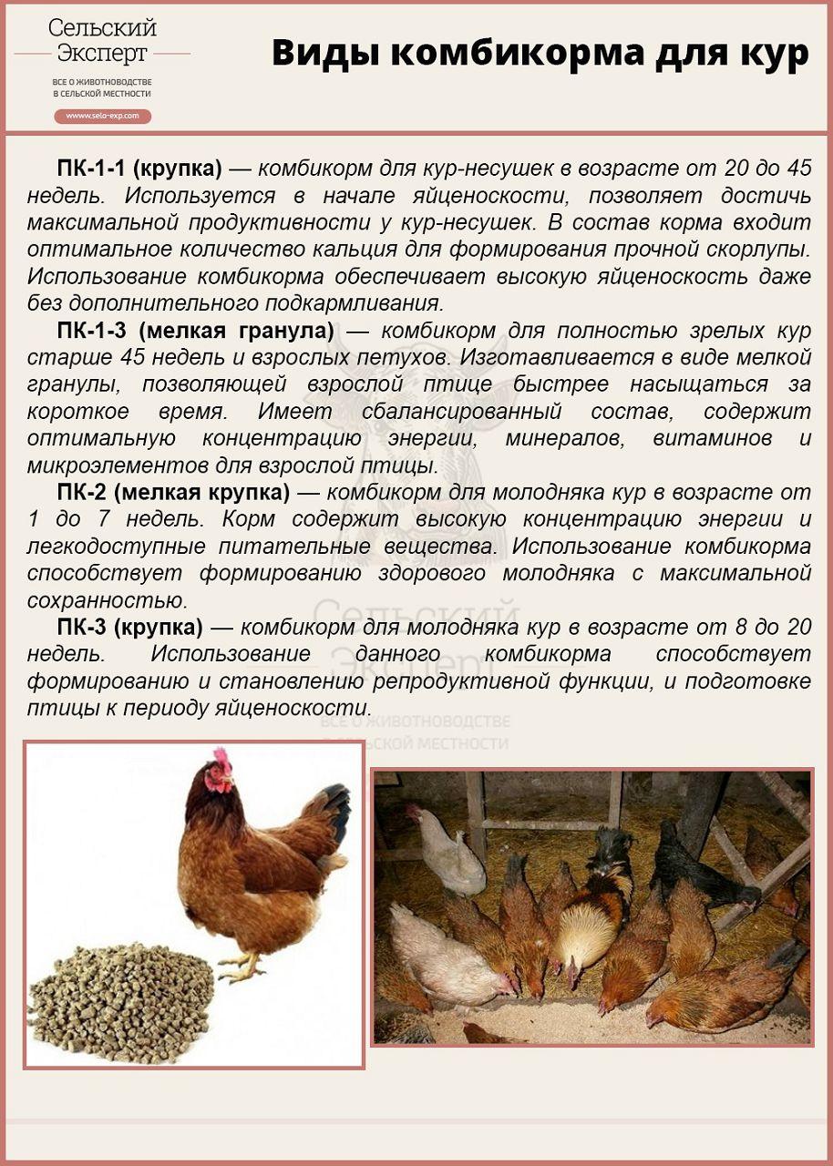 Комбикорм для кур несушек своими руками: рецепты и порядок приготовления!