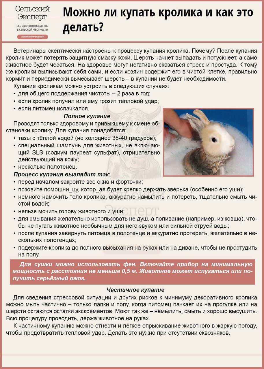 Чем кормить декоративного кролика в домашних условиях  520