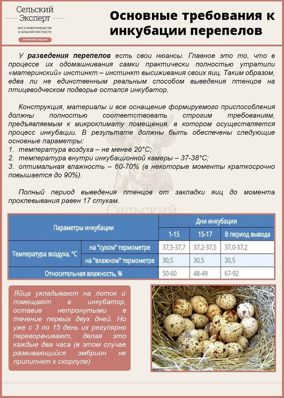Инкубация перепелиных яиц: режим инкубации. - Инкубаторы