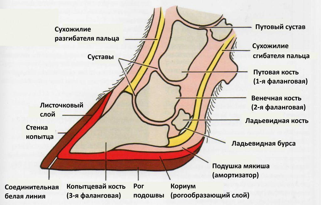 лечение наливов скакательного сустава