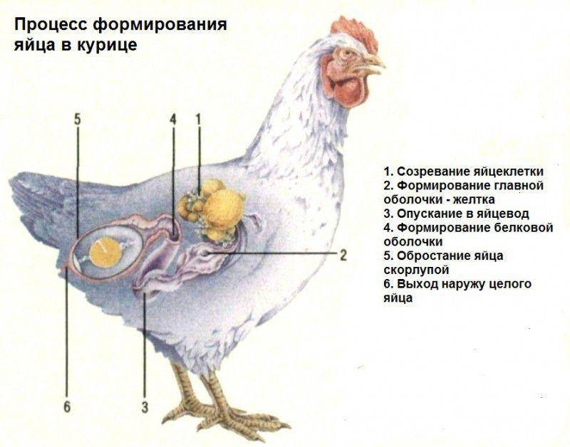 Как сделать лучше курицу