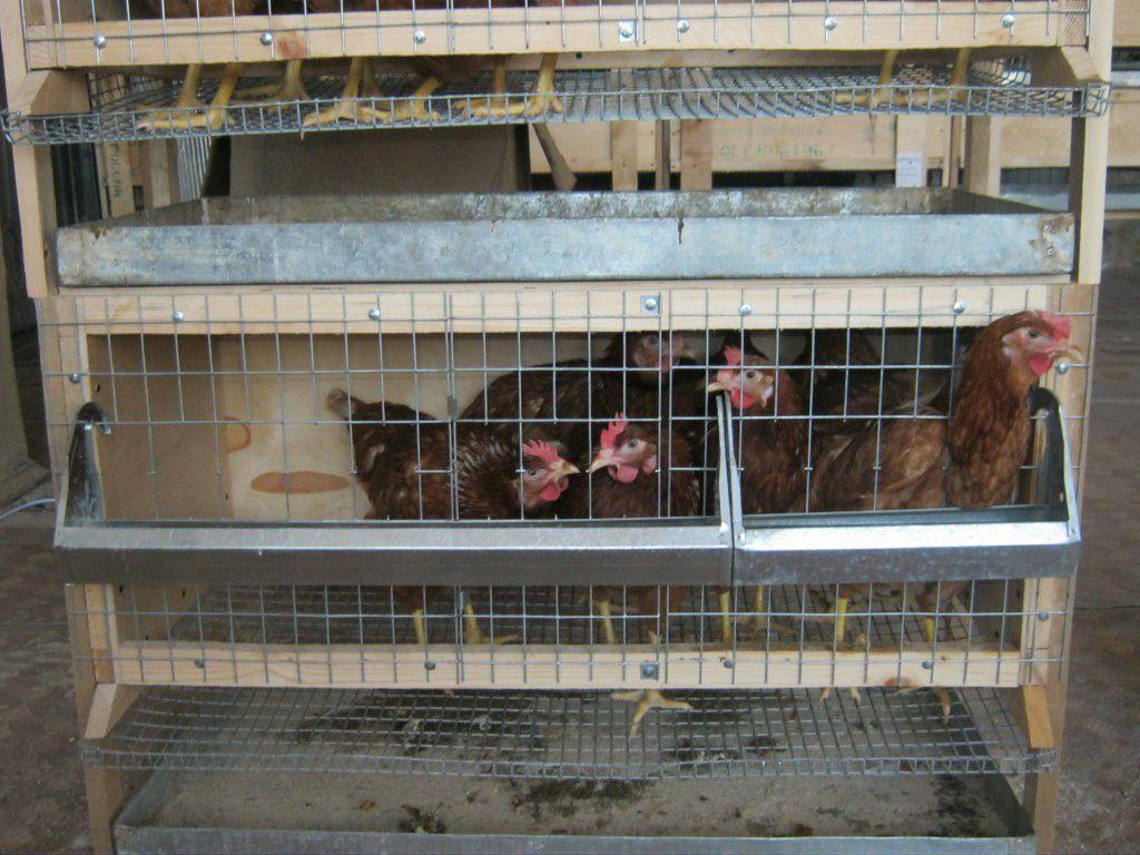 Клетки для выращивания куриц 943