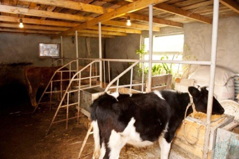 Фото ясли для коров своими руками