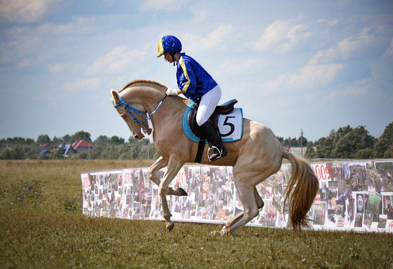 Ахалтекинская лошадь удобна для наездников