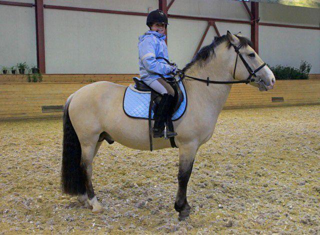 Башкирская лошадь находит контакт даже с начинающим наездником