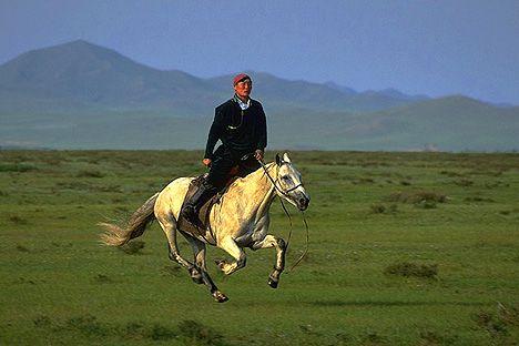 Башкирские лошади удобны под седлом