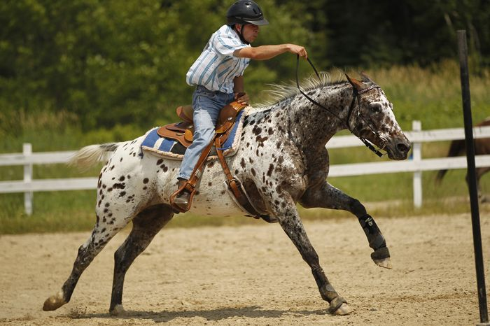Благодаря атлетической спине и сильным ногам, лошадь Аппалуза достигает успехов в верховой езде