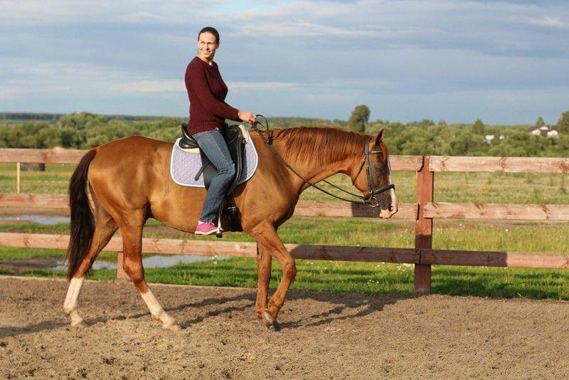 Донская лошадь в школе верховой езды