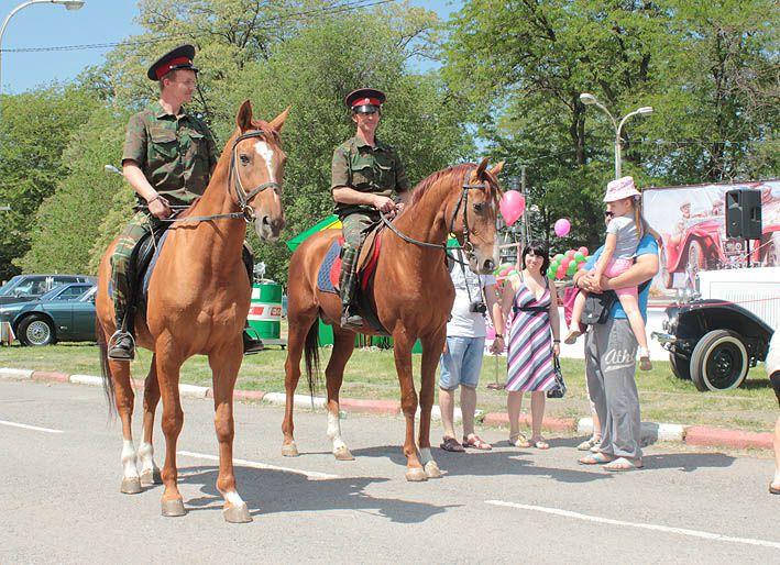 Донские лошади на службе