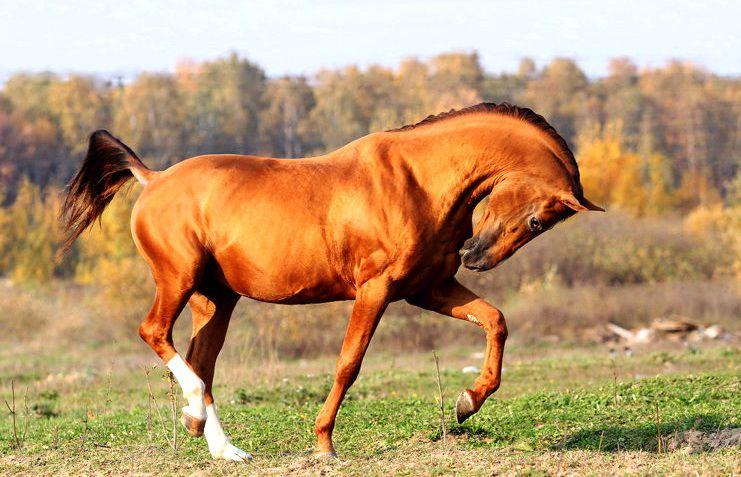 Донским коням требуетсяпостояннаяфизическаяя нагрузка