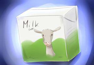 Жирность молока ангорской козы не превышает 5%