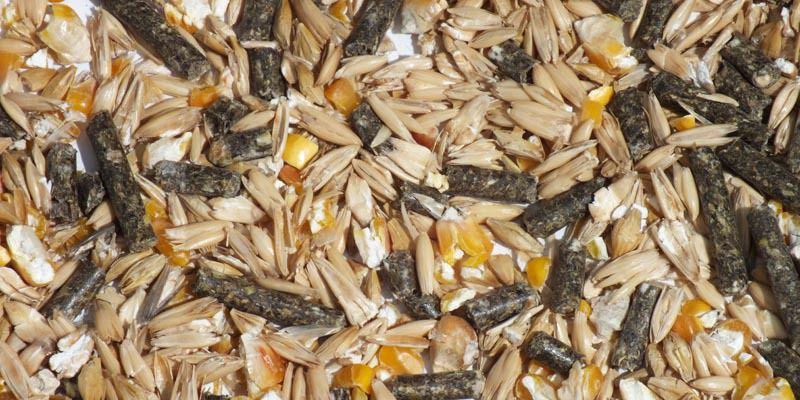 Зерновые корма могут содержать пшеницу, овес, горох и жмых