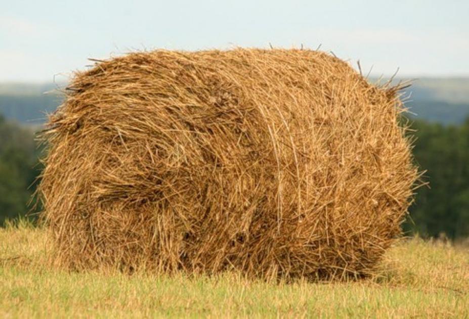 Зимой сено должно составлять до половины рациона взрослой лошади