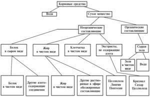 Классификация составляющих элементов корма бакинских голубей