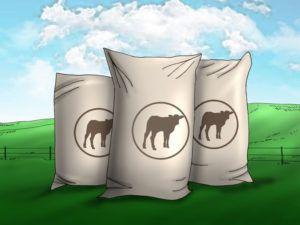 Корм для рогатого скота