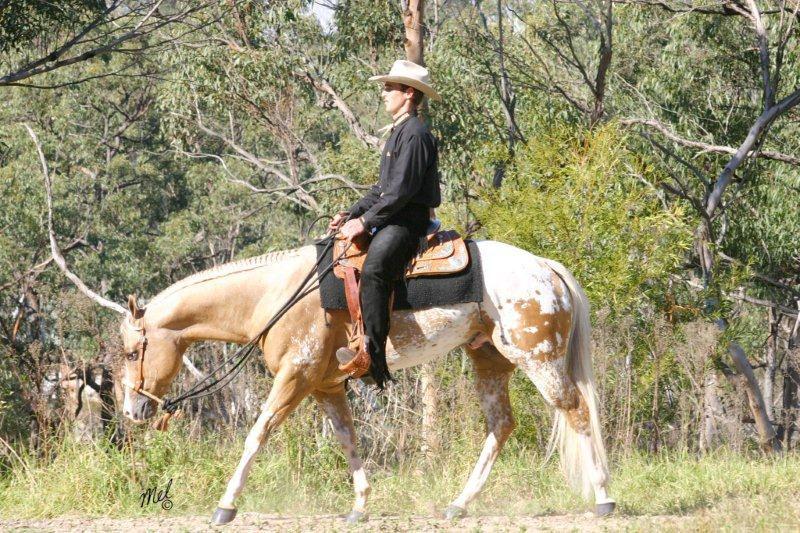Лошадь Аппалуза - настоящий друг
