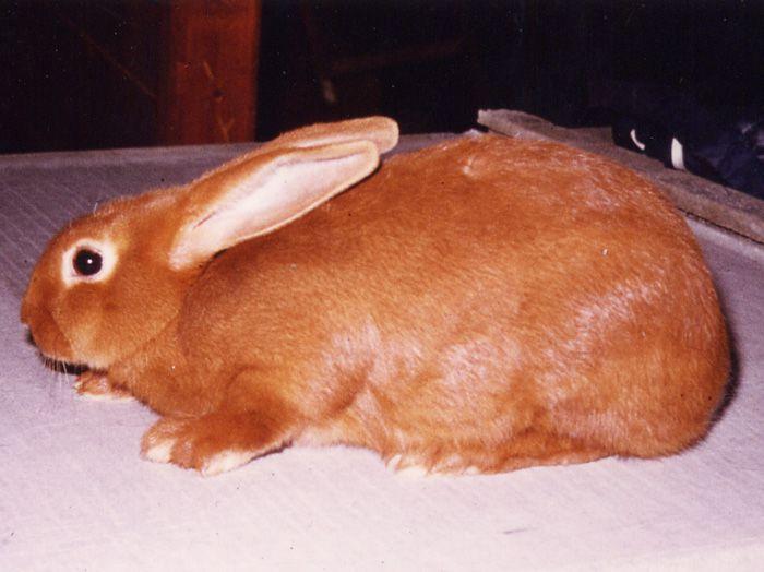 Мясо бургундского кролика имеет низкую калорийность