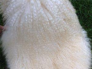 На качество шерсти влияет питание козы