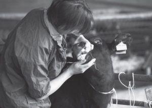 Необходимо регулярно осматривать кожные покровы и слизистые животных, чтобы вовремя диагностировать заболевание