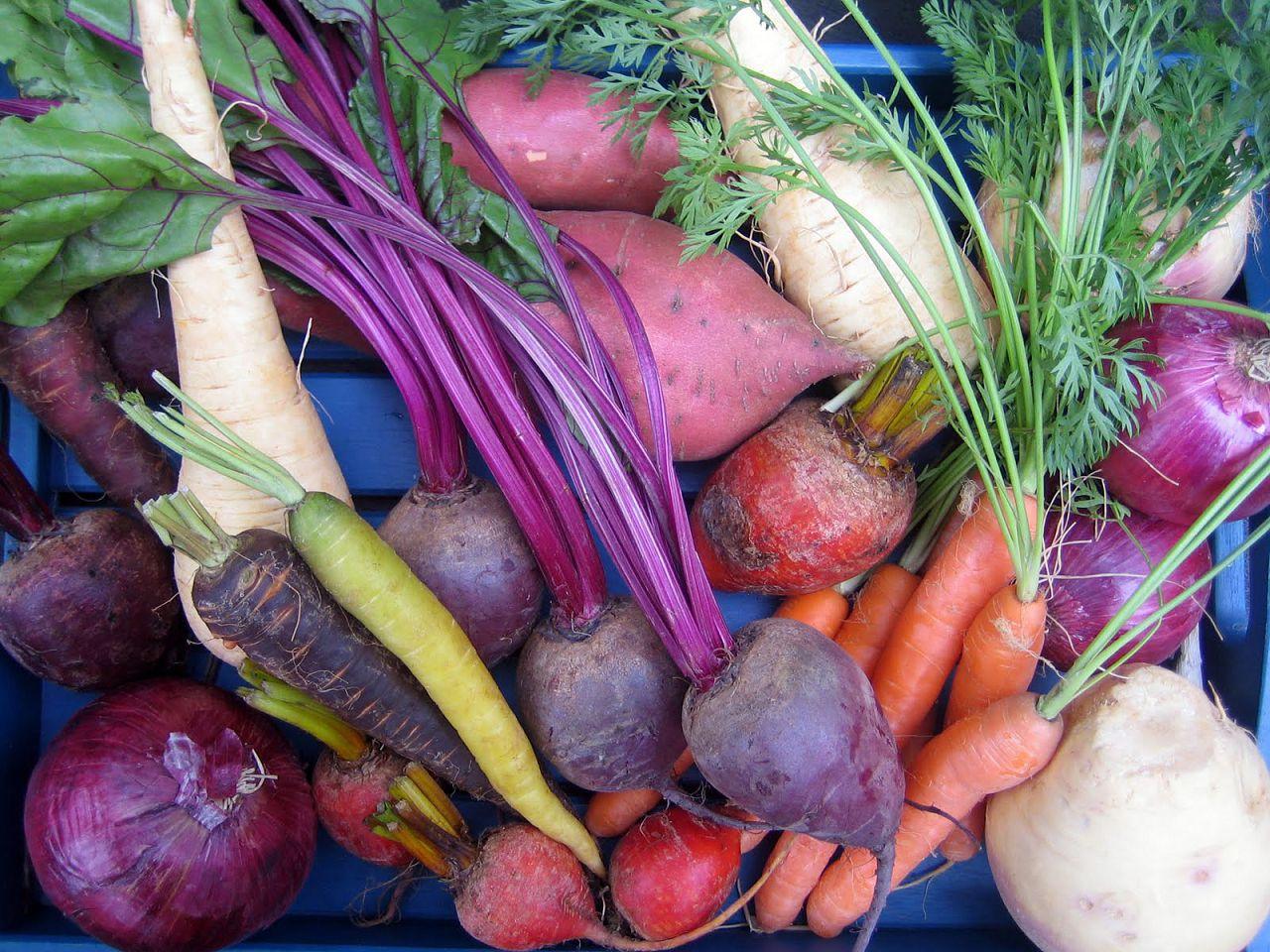 Перед кормлением овощи нужно хорошо промыть и нарезать