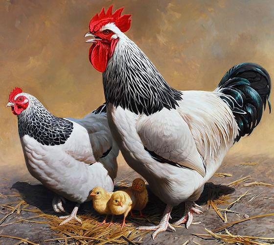У адлерских серебристых птиц необычный окрас