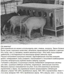 Рацион коз