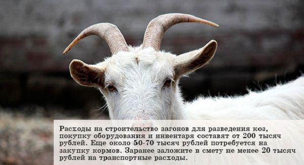 Факты о животноводческом хозяйстве